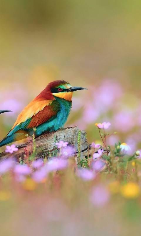 bird flowers