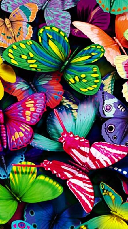 Butterfly Bright Wallpapers Butterflies