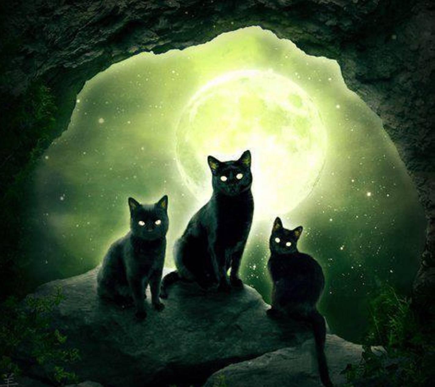Seer Cats