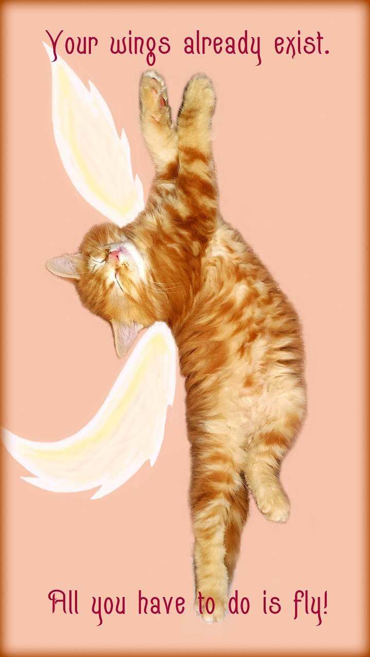 Wings to Fly Kitten