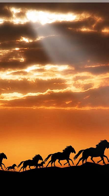 3d Sunset Horse