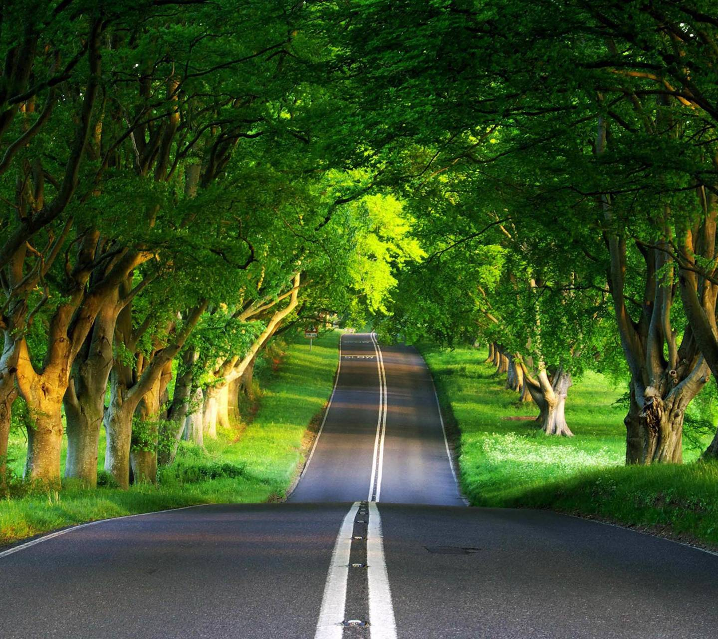 Long Road Of Nature