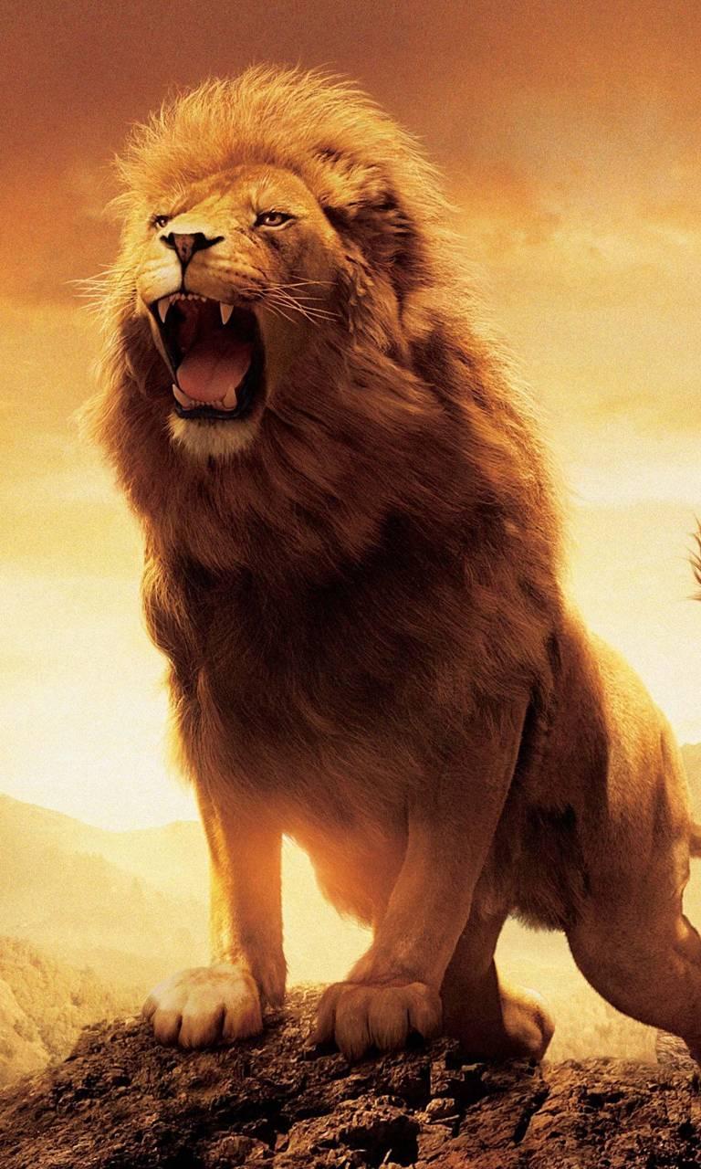 Lion Wallpaper By Ali Fr Df Free On Zedge