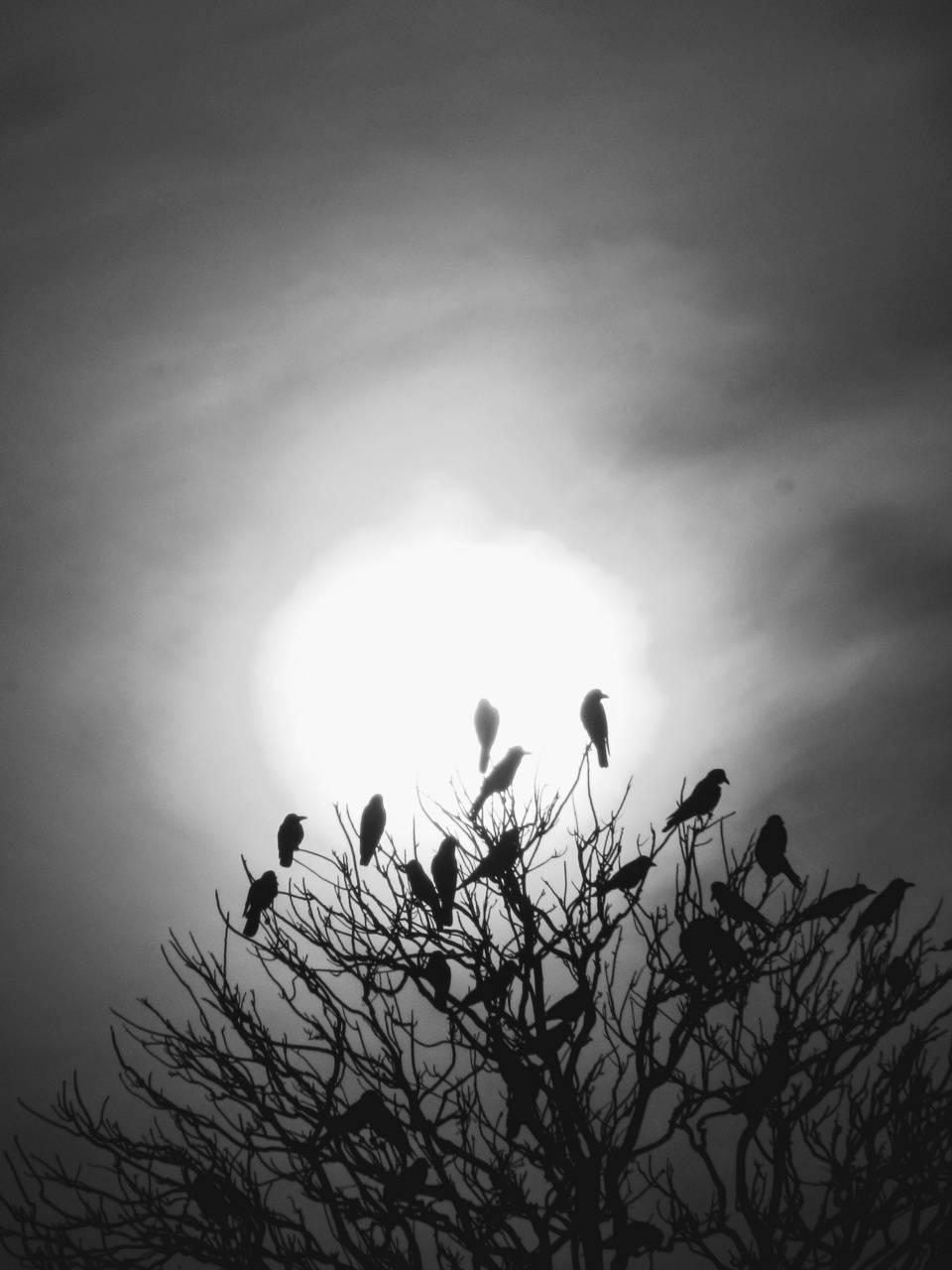 BirdsMood