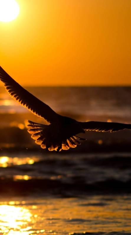 Eagle ringtone