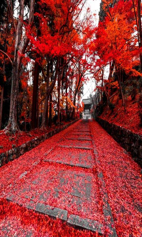 Red Autumn View