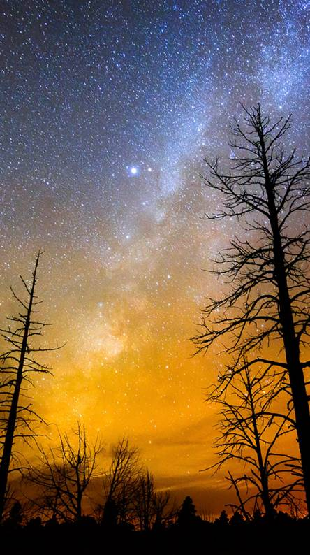 Night forest sounds Ringtones and Wallpapers - Free by ZEDGE™