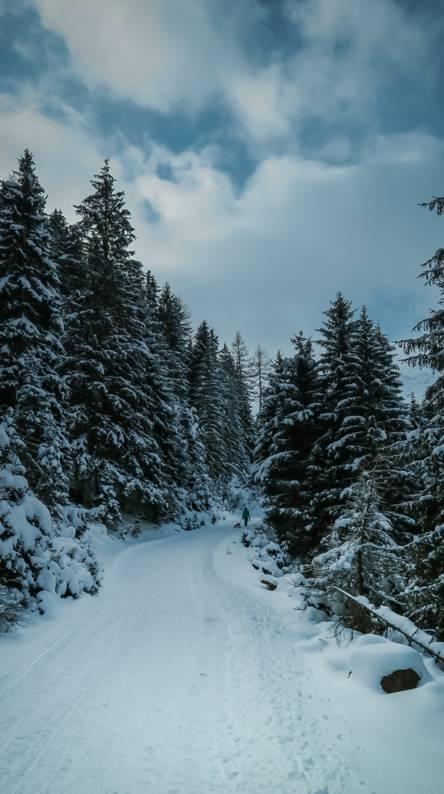 Newyear19 Snowy Road