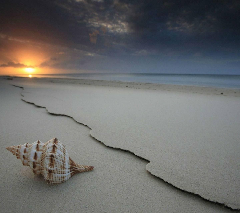 Sea Shell Hd