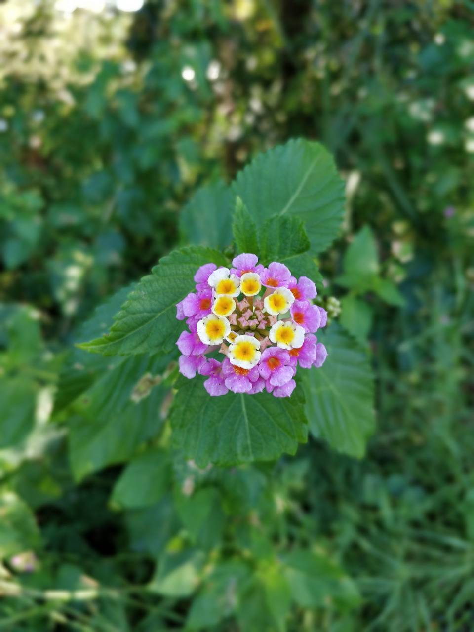 Boca flower