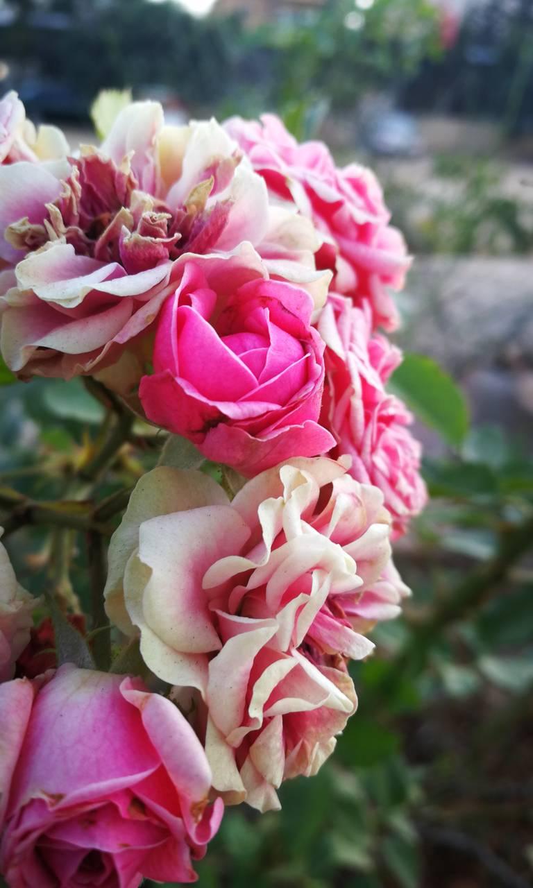 autumn flowers wallpaper_shady_boy_ - ab - free on zedge™