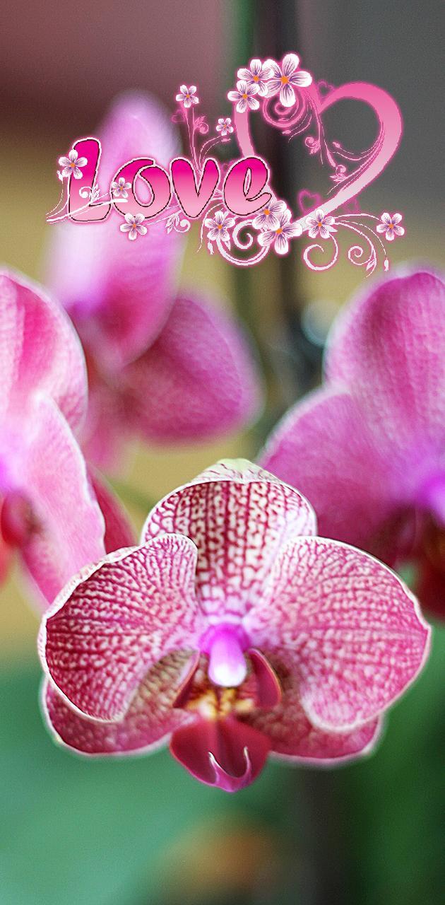fan of orchids