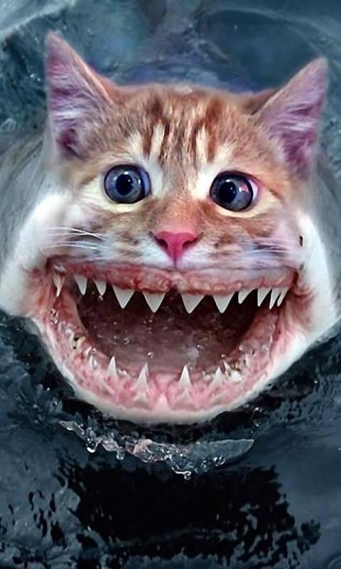 Shark A Cat