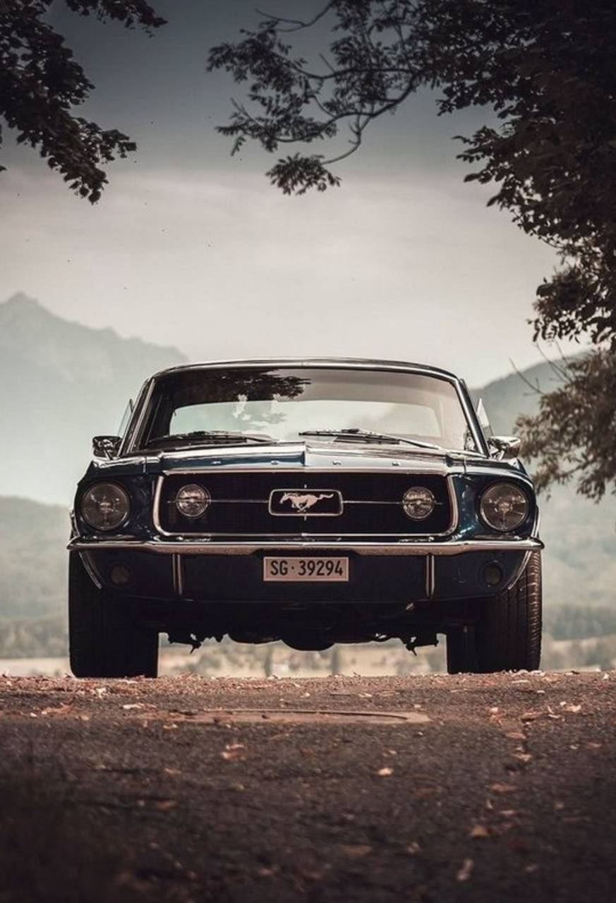Mustang and Street