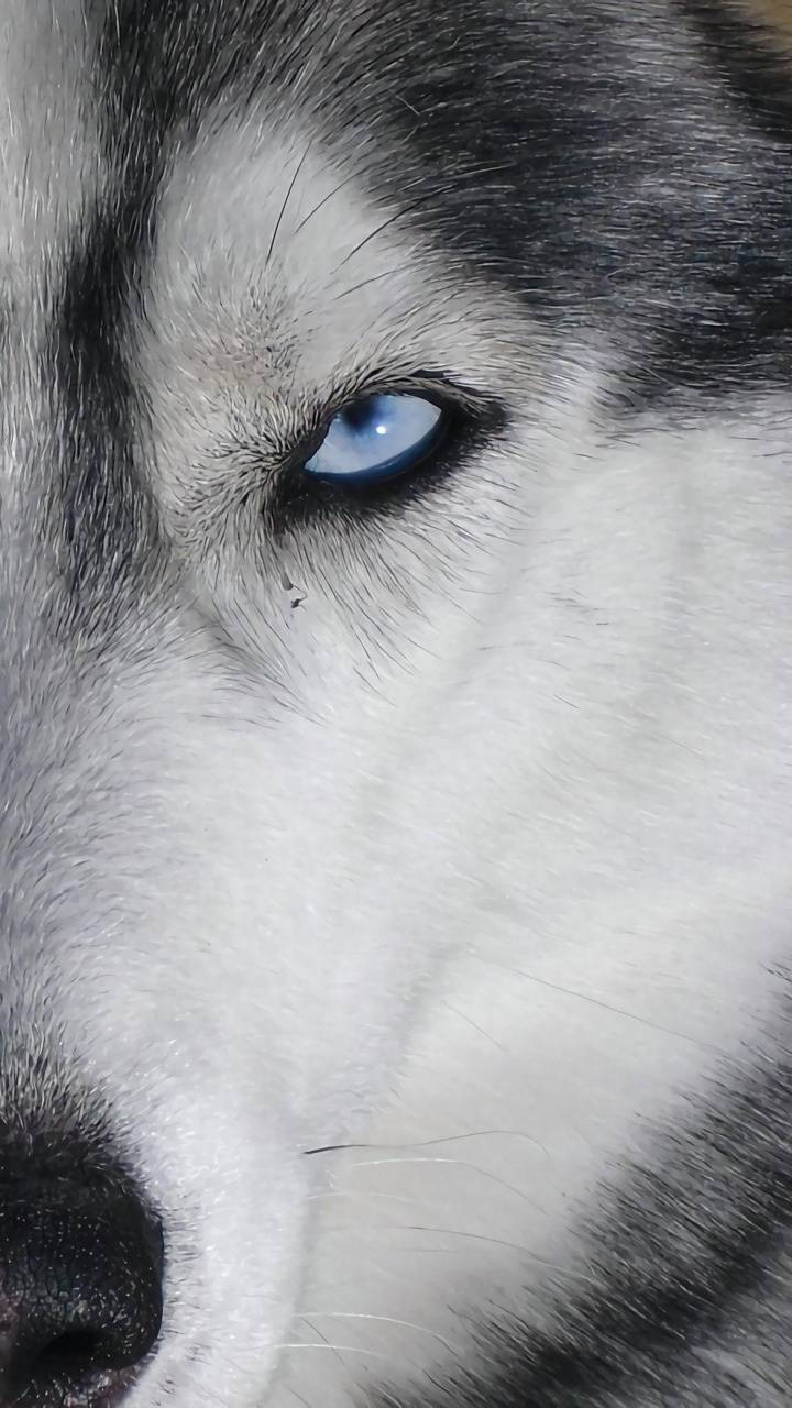 Wolf Eye Wallpaper By Georgekev B7 Free On Zedge