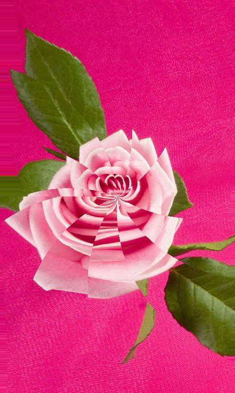 Abstract Pink Rose