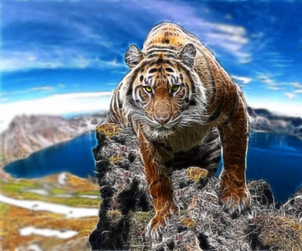 tiger on mountain