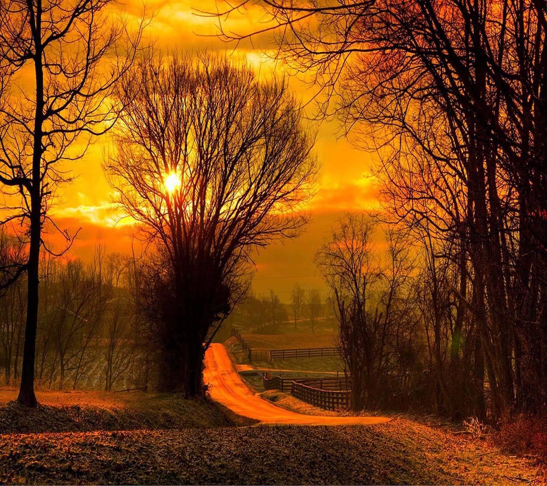 Sun leaves field