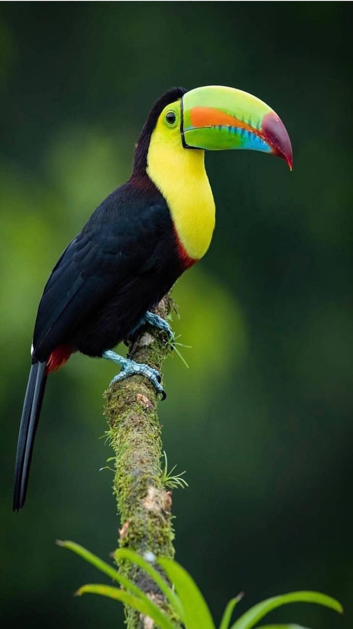 colored beak