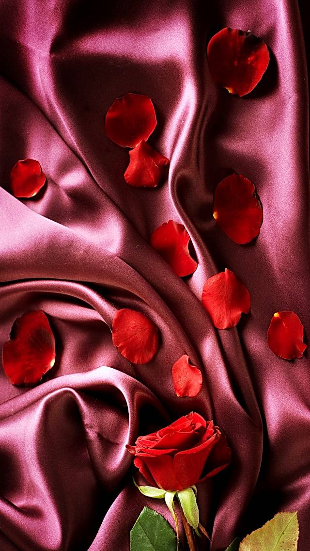 Rose On Silk