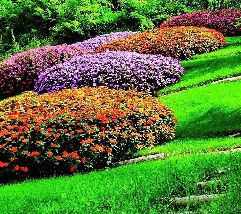 nature-------------