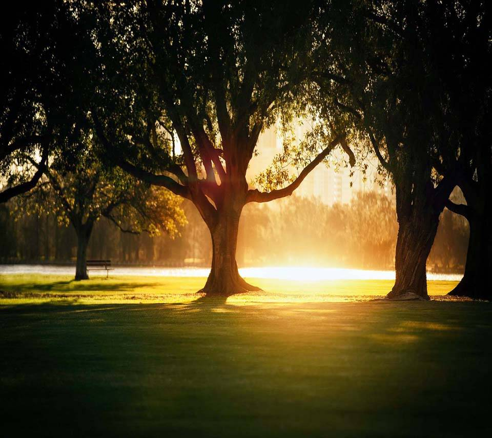 Sunlight trees shade