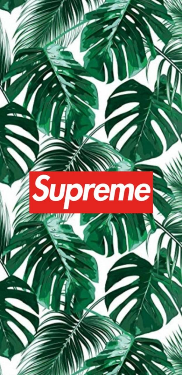 Suprem plant
