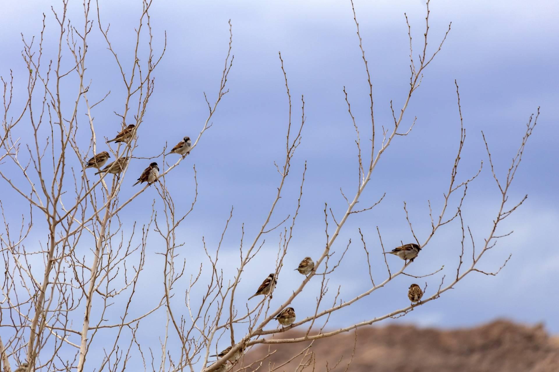 qom city - Birds