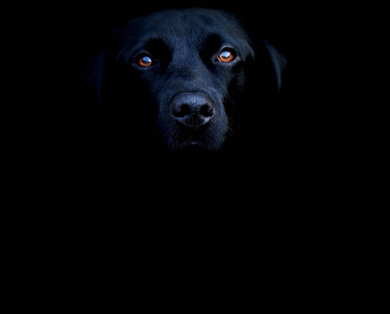 Прикольные темные картинки