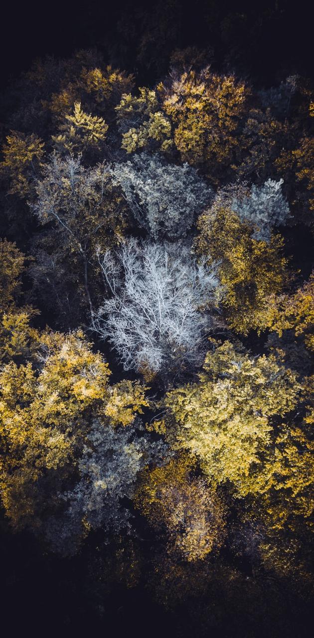 Yellow treeeeesss