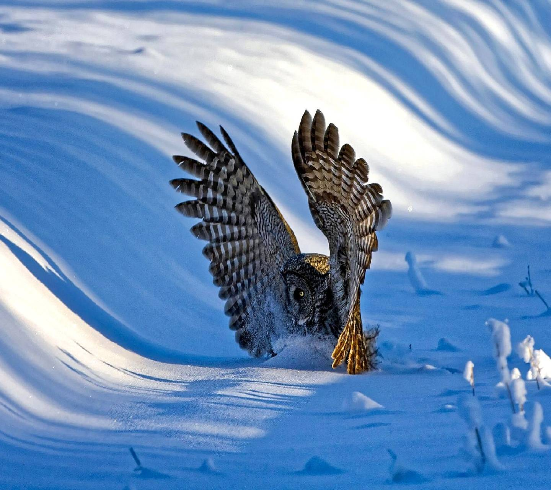 owl----------