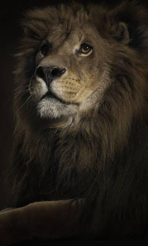 Lion King Hd
