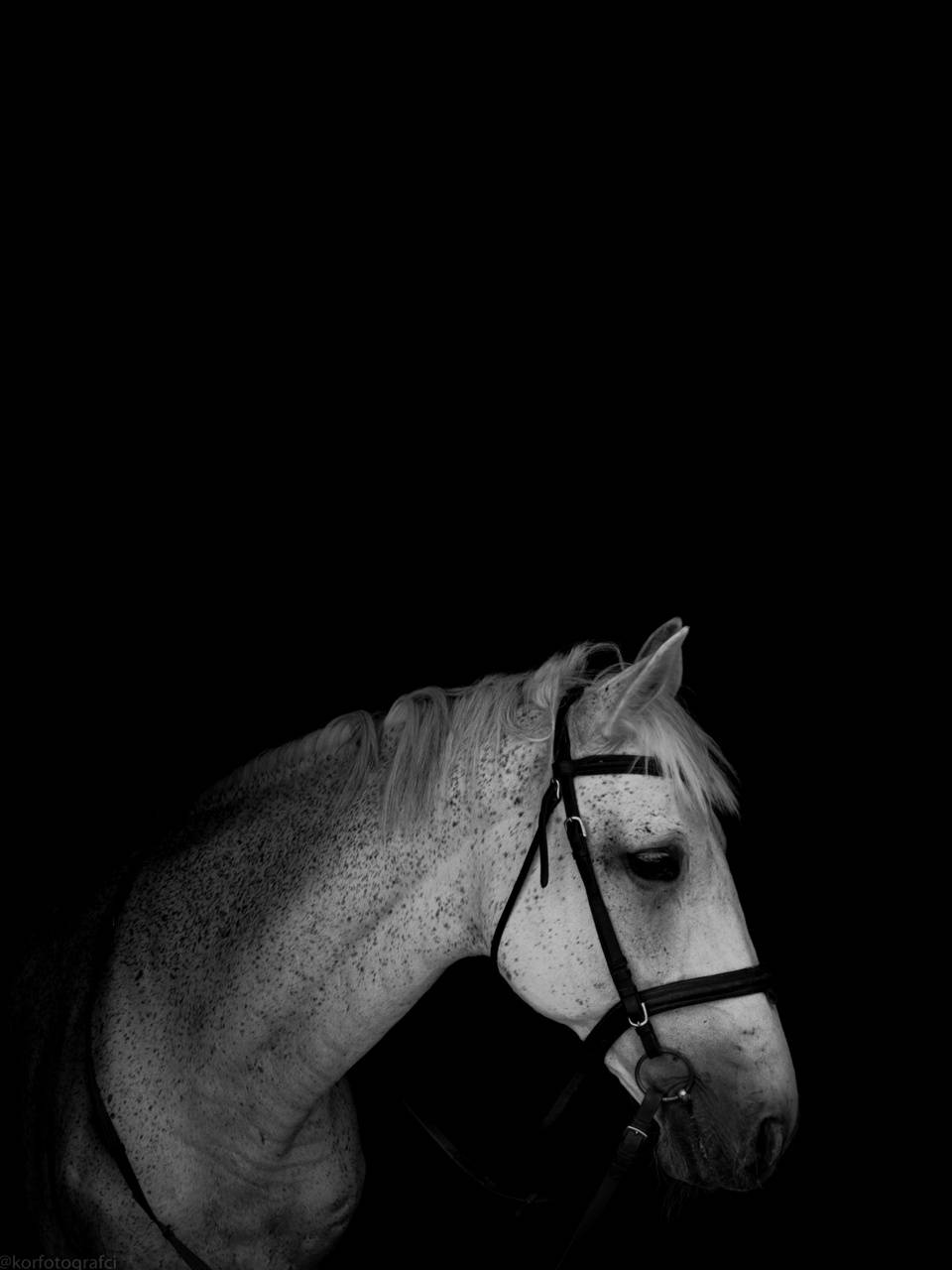 Horse in the black