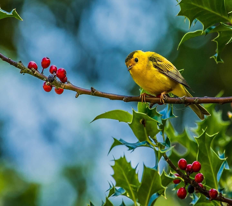 Bird Hd