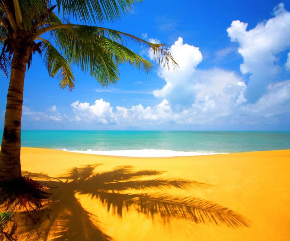 Beach-nature