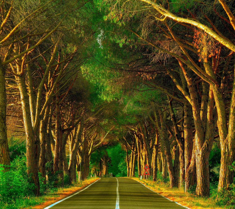 Path Road