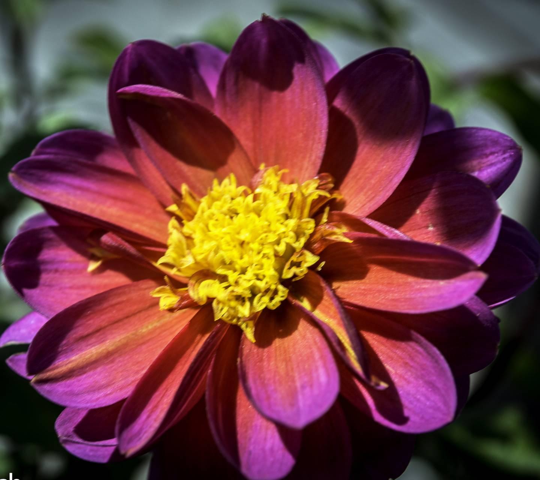 Orange Pink Flower