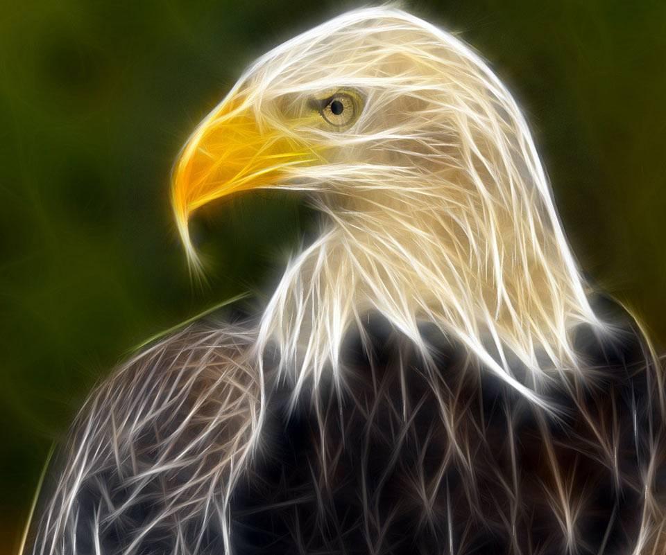 Light Eagle