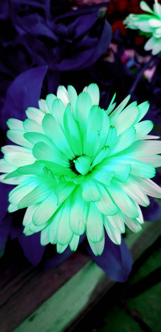 Luminous Flower