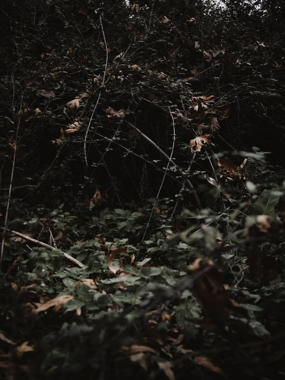 Hunted Forest