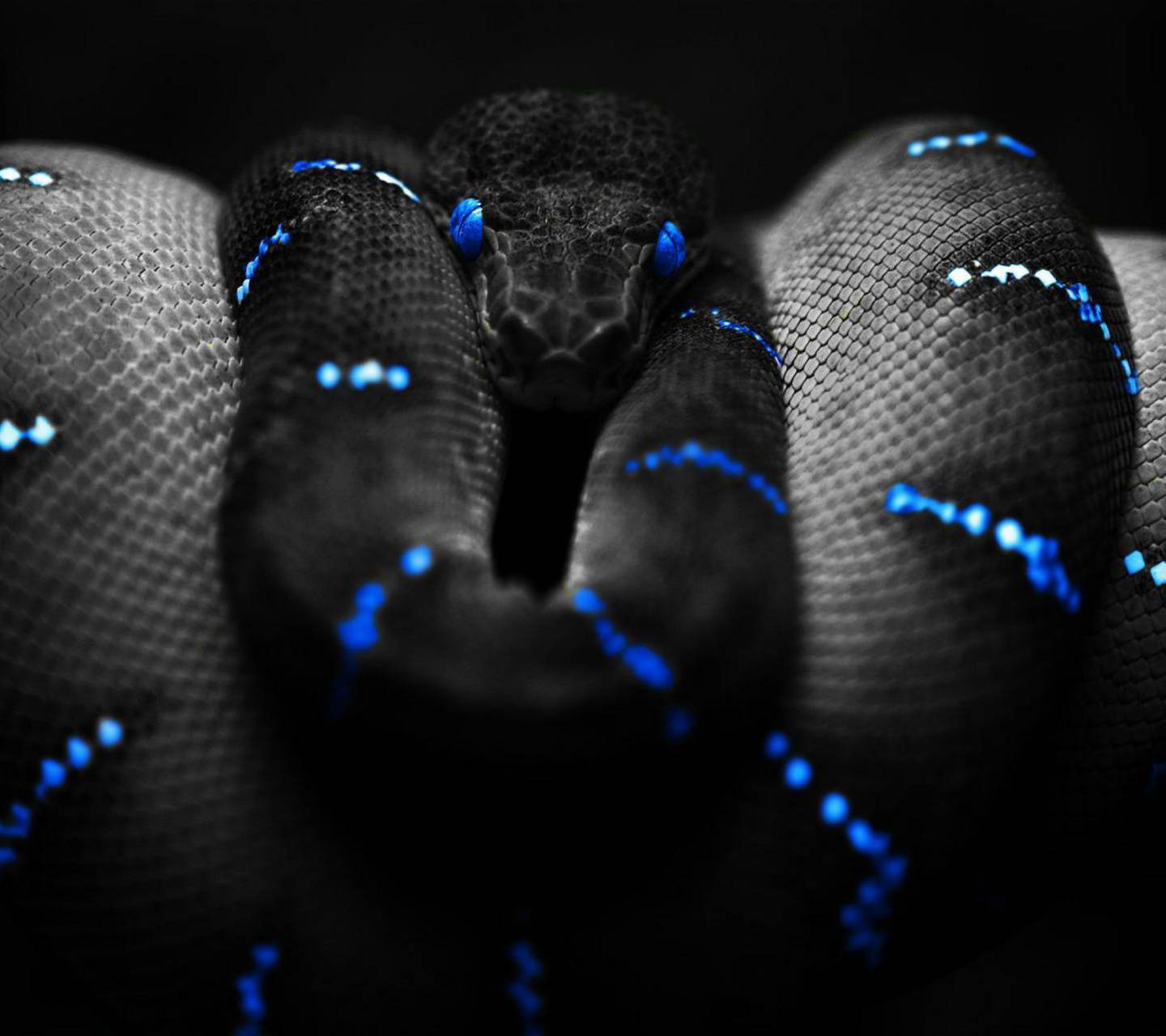 Electric snake