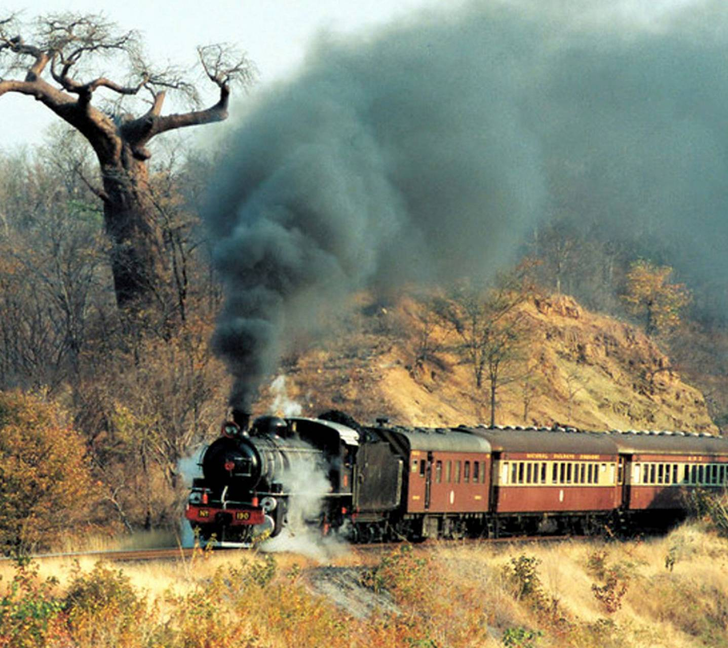 Train In Woods
