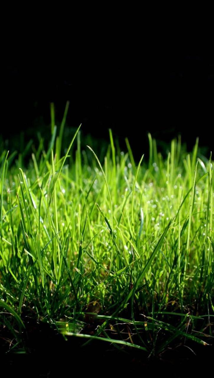 Grass Macro QHD