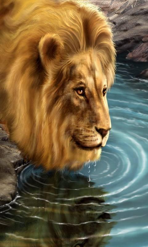 Lion watering hd