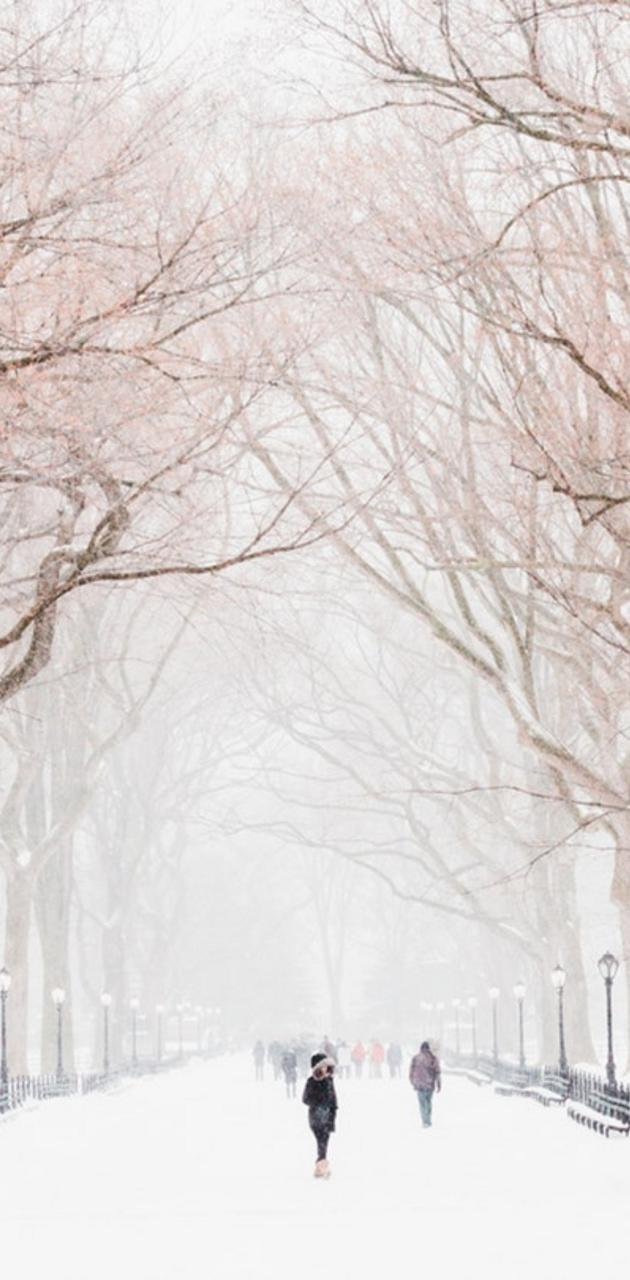 Winter tree walk