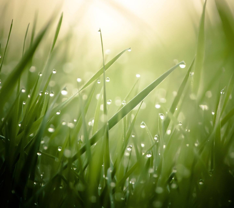 Grass HD