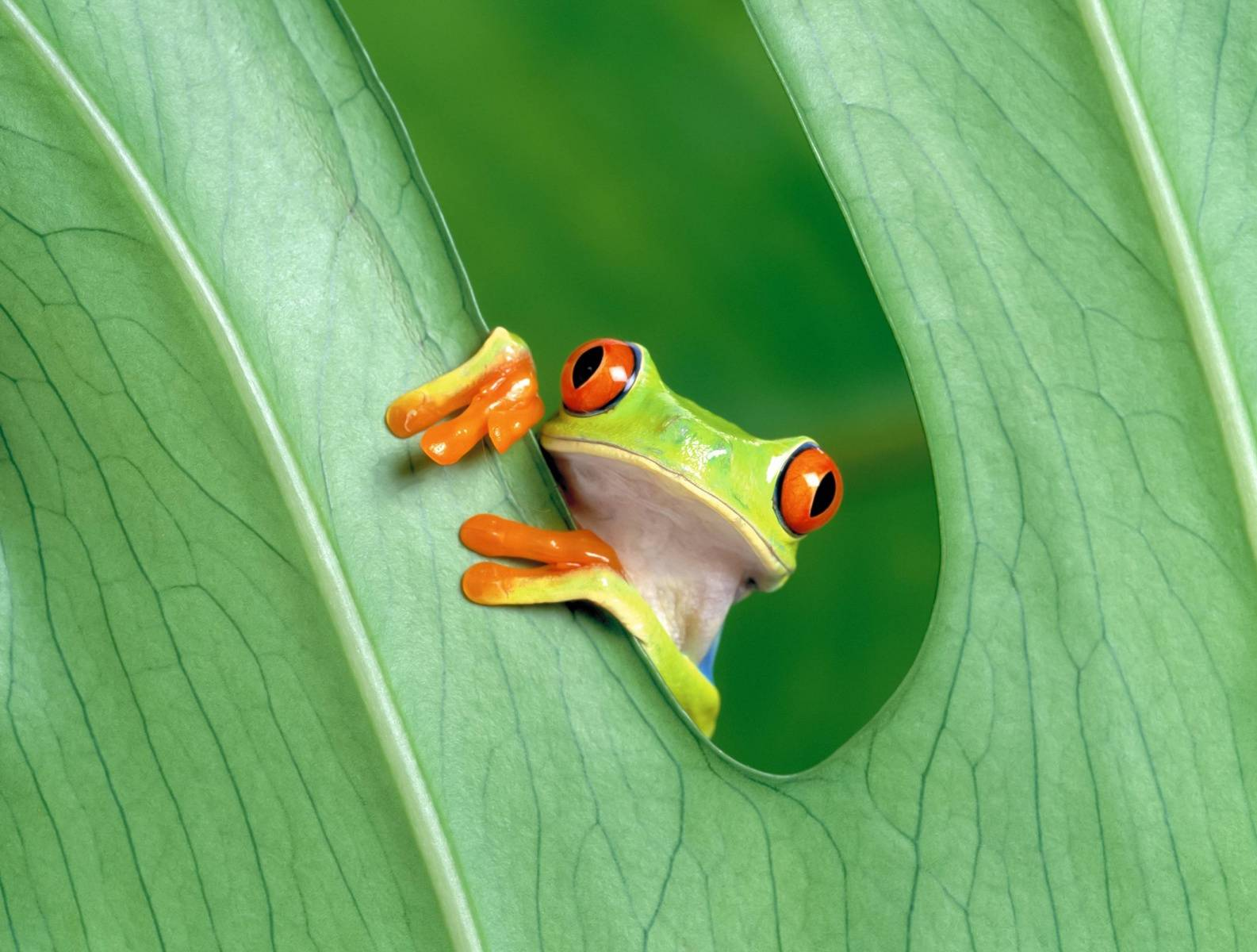 Lonely Frog