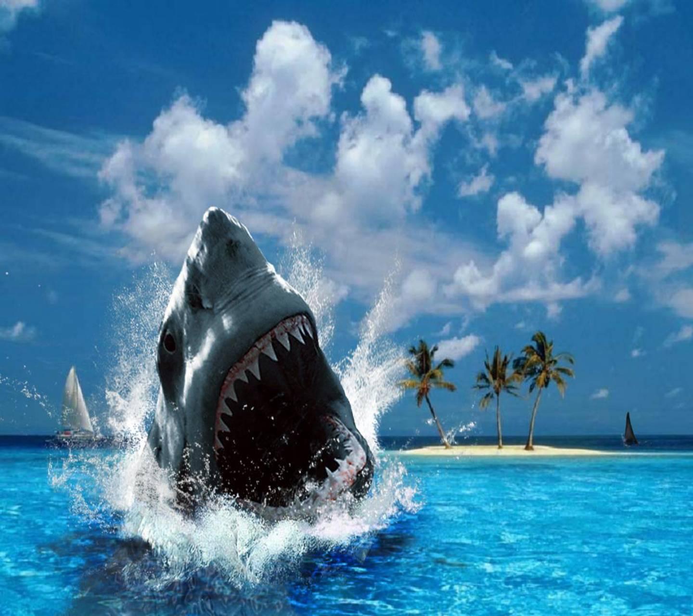 Shark Hd
