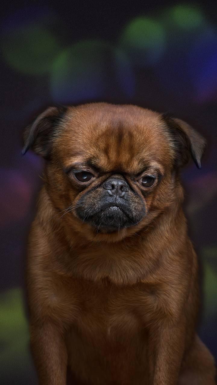 dog face 2