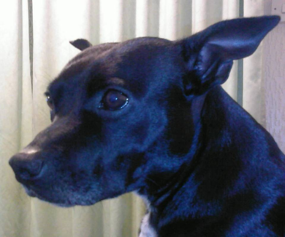 Beautifull Dog
